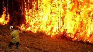 Bush-fires